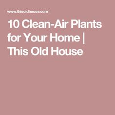 10 Clean-Air Plants for Your Home | This Old House