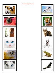 Animal Activities For Kids, Infant Activities, Visual Perceptual Activities, Diy Pour Enfants, Kindergarten, Preschool Printables, Learning Centers, Autumn Theme, Sensory Play