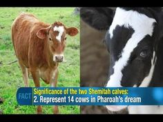 Jonathan Cahn: 2 times 7 Cows appeared in America like in Pharaoh's Egypt (15 min)