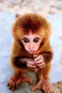 Baby Monkey - Photo by (fotoankh) Anna Ponomareva