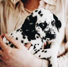 Coffee & Grace I love a dalmatian puppy! Animals And Pets, Baby Animals, Funny Animals, Cute Animals, Puppies And Kitties, Cute Puppies, Cute Dogs, Doggies, Giraffes