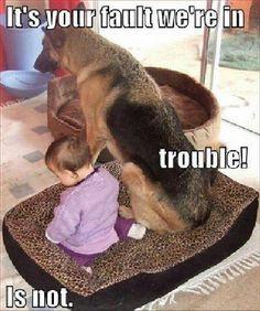 haha...cute.. funny animals ...