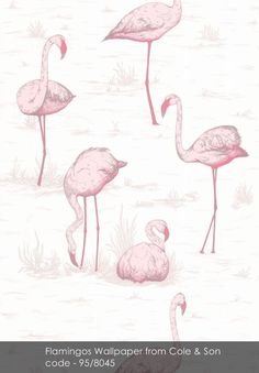 Flamingos wallpaper from Cole & Son