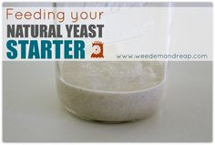 Weed em and Reap: Feeding your Natural Yeast STARTER