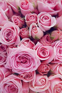 Our Valentine s Day wish list is simple Anything and everything pink Mary Kay # Pastel Roses, Yellow Roses, Red Roses, Pink Flowers, Exotic Flowers, Violet Pastel, Ranunculus Flowers, Black Roses, Pink Peonies