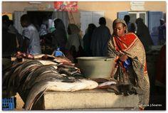 fish market in Nouakchott, Mauritania