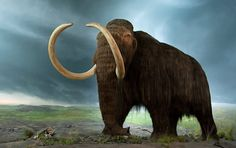 Russian scientists undertaking an exploratory expedition on the Lyakhovsky Islands have discovered woolly mammoth remains including skin and tusk, which they believe suitable for obtaining the DNA necessary to clone the animal.