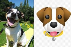 new dog emojis thanks to Dogs Trust