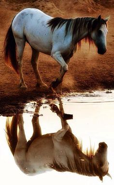 ...'Mirror mirror in the pond...    who's the fairest horsey bond?'