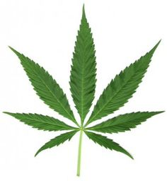 Marijuana May Be a Treatment for Alzheimer's disease . A new preclinical study indicates that THC, the active ingredient in marijuana, may slow or halt the progression of Alzheimer's disease . Alzheimer's Reading Room JUST MAKE IT LEGAL Marijuana Leaves, Cannabis Oil, Stencil, Leaf Silhouette, Hemp Leaf, Temp Tattoo, Alzheimer's And Dementia, Clip Art, Medical Marijuana
