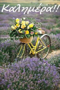 Bicycle Decor, Bicycle Art, Spring Aesthetic, Flower Aesthetic, Beautiful Gif, Beautiful Gardens, Photo Velo, Lavender Fields, Flower Wallpaper