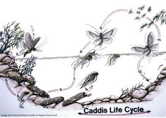Fly fishing insects and anatomy on pinterest for Cabela s fly fishing