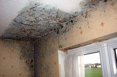 MUFFA SULLE PARETI? ECCO IL RIMEDIO PER TOGLIERLA DEFINITIVAMENTE Spesso, complice una scarsa ventilazione o il clima, sulle pareti della nostre case