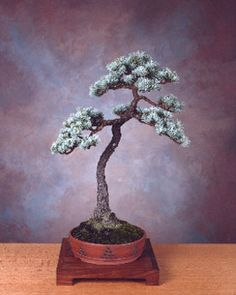 Bonsai Inspiration! These Inspire Me, Anyone Else? - HelpfulGardener.com
