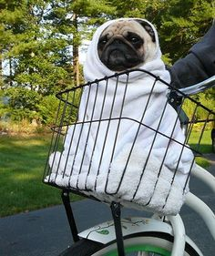 16 Frighteningly Cute Halloween Pet Costumes
