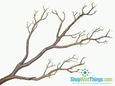 "This awesome bendable ""Manzanita"" branch is really  perfect for making your wedding trees or centerpieces. The height is 31"" and the thick trunk's base is 1.5"" in diameter!Bend the branches to your"