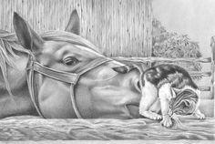 Nosey by *paperdragon1967  Traditional Art / Drawings
