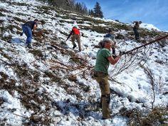 Die erste Woche auf der Flittneralm - Bilder vom freiwilligen Arbeitseinsatz Flora Und Fauna, Mountains, Nature, Travel, Outdoor, First Week, Heritage Site, Volunteers, Agriculture