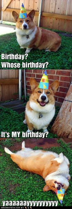 It's my birthday, dog!