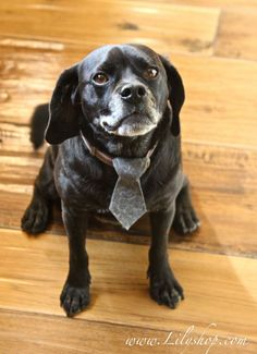 Felt Dog Tie @Lilyshop
