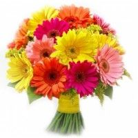 Splash of Summer - A bright mixed bouquet of gerberas in summer colours, to easily brighten up and put a smile on someone's face. Bonsai Plants For Sale, Bonsai Plants Online, Order Plants Online, Best Online Flowers, Order Flowers Online, Wedding Bridesmaid Bouquets, Wedding Ceremony Flowers, Seasonal Flowers, Flowers Bunch
