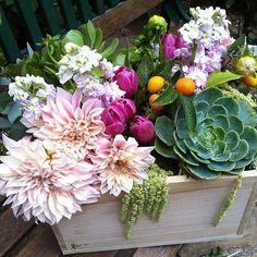 cafe au lait dahlia bouquet with organic succulents and amaranthus