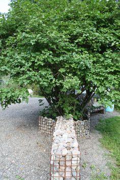 Ekikori kivikorit puutarhassa