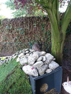 Bunnyhome covered in stones and grass to make a waterfall. Our own creation. My bunny's and we like it a lot.
