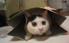 Een kat kan bang of schuw zijn. Laat een angstige kat nooit naarbuiten gaan. Het beste is om de bange of schuwe huiskat geen aandacht te geven.
