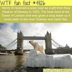 WTF Fun Facts is updated daily with interesting & funny random facts. We post about health, celebs/people, places, animals, history information and much more. New facts all day - every day! Wtf Fun Facts, True Facts, Funny Facts, Random Facts, Interesting Information, Interesting History, Interesting Facts, Fascinating Facts, Amazing Facts
