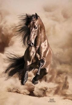 Wild horses are at risk of being captured/ killed. Speak out against this action. Majestic Horse, Majestic Animals, Horse Photos, Horse Pictures, Pretty Horses, Horse Love, Animals And Pets, Cute Animals, Most Beautiful Animals