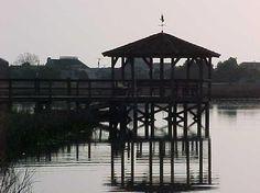Pawleys Island, South Carolina...hunting crabs in the bay.