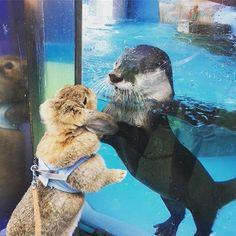 Otter meet bunny - January 17 2018 #SoCuteBabies #Animal #AnimalLover #AnimalLovers