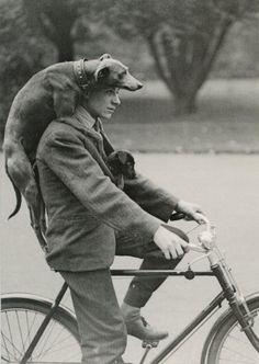 dog riding bike with man