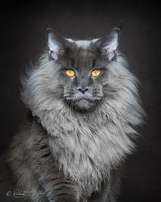 神々しい猫たちがイケメンすぎる上にドアーズのジム・モリソンに似すぎ - Spotlight (スポットライト)