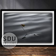 Downloadable abstract, digital photo, printable wall art, dream, leaf, river, cosmos, water, spring, branch, reflection, Vienna, Austria Spring Branch, Vienna Austria, Photo Tree, Landscape Photos, Nature Photos, Printable Wall Art, Cosmos, Reflection, Digital Art