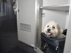 """Many airlines welcome small pets, tucked away in their carriers and sharing your legroom, but American Airlines is venturing a step further with a first-of-its-kind """"pet cabin."""""""