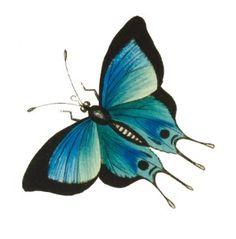 Cambridge Blue Hairstreak Butterfly - Curious Clipart - Vintage Clip Art