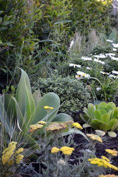 living gardens landscape design a border combines yarrow achillea shasta daisy leucanthemum - Living Gardens Landscape Design