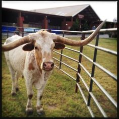 Now, this is Texas! Photo by our very own @Barbara Acosta Ovrutsky in Austin. #clfair