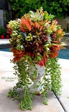 Beautiful succulents in an urn.