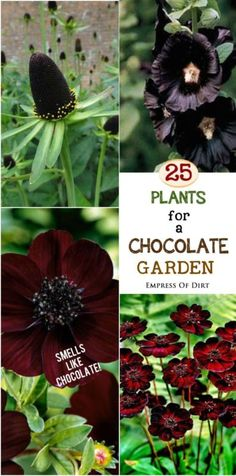 Imagine a garden with the fragrance of a freshly opened box of delicious chocolates! It's not as crazy as it sounds. There are a handful of plants that have a distinct chocolate scent, reminiscent of milk chocolate with a dash of vanilla. Garden Shrubs, Garden Plants, Garden Landscaping, Shade Garden, Herb Garden, Vegetable Garden, Outdoor Plants, Outdoor Gardens, Modern Gardens
