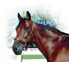 Rambling Willie (1970 - 1995), beloved harness racer who raced for a whopping 304 starts.