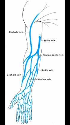 Vein plotting