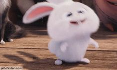 Bunny Laugh - Find and Share funny animated gifs Funny Cartoon Gifs, Cute Cartoon Wallpapers, Funny Jokes, Funny Videos, Snowball Rabbit, Gif Bonito, Rabbit Wallpaper, Cute Bunny Cartoon, Rabbit Gif