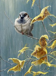 704-rainy-day-sparrow