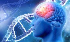 Η διατροφή που προστατεύει από το Αλτσχάιμερ…
