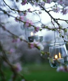hanging votives in flowering trees. via everythingsalt.blogspot
