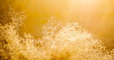 Solar Plexus Chakra Healing For Beginners: How To Open Your Solar Plexus Chakra
