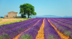I got The South of France! Where Should You Actually Go For Your Honeymoon?